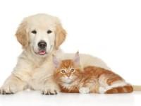 Coconut Oil for Pets, Dogs, Cats, Parrots